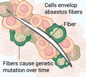 cancer cells being developed by asbestos