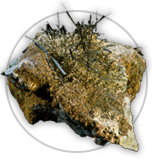 Actinolite Icon