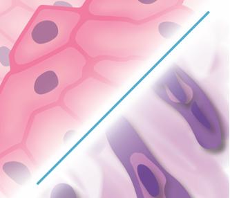biphasic cell