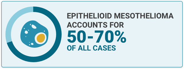 Illustration of an epithelioid cell with the text fact that states that Epithelioid mesothelioma accounts for 50-70% of all cases