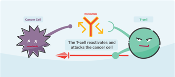 immunotherapy image