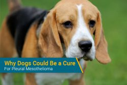dogs for detecting mesothelioma
