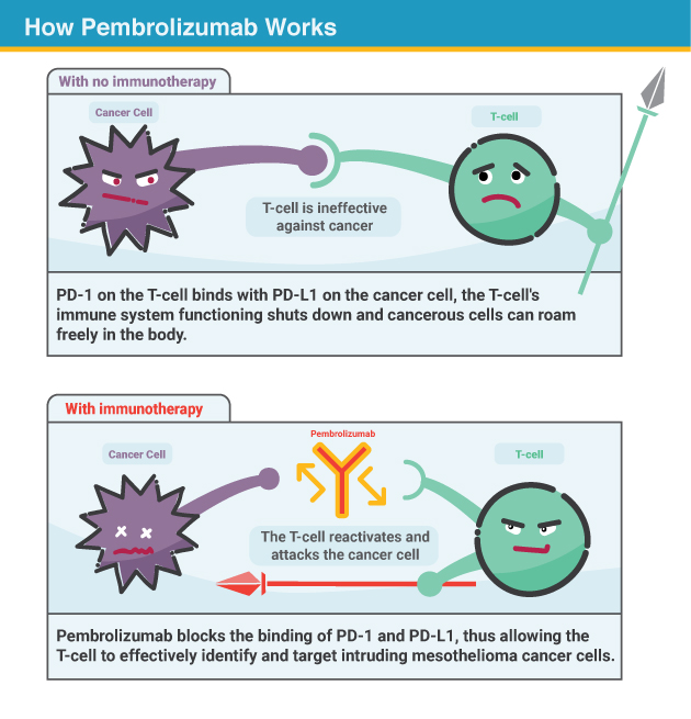 how immunotherapy works
