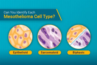 three mesothelioma cell types
