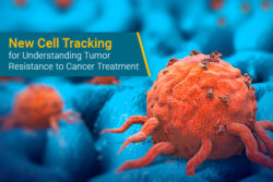 cell tracking for cancer resistance to therapy